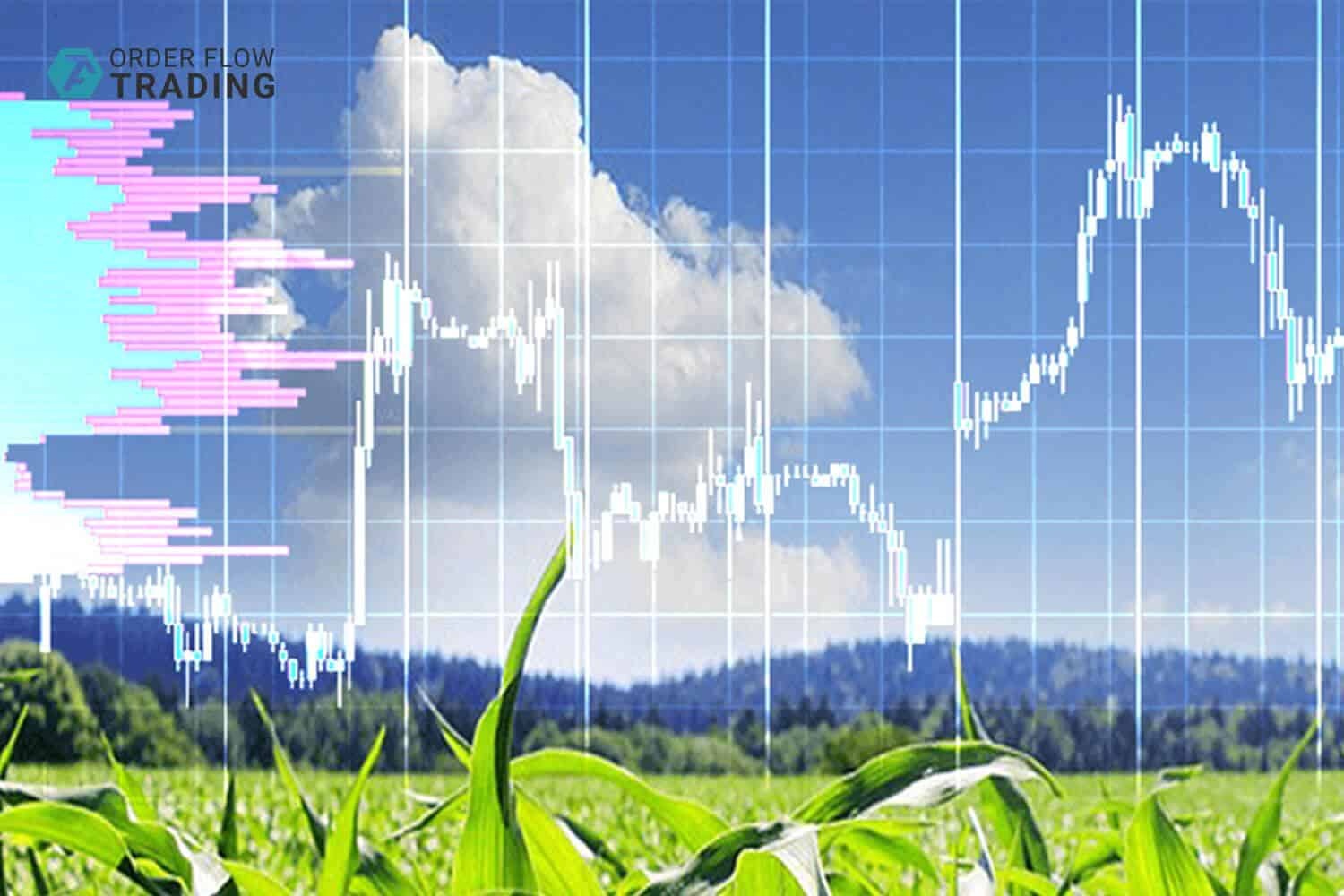 Corn futures: 7 important things you should know. Part 1